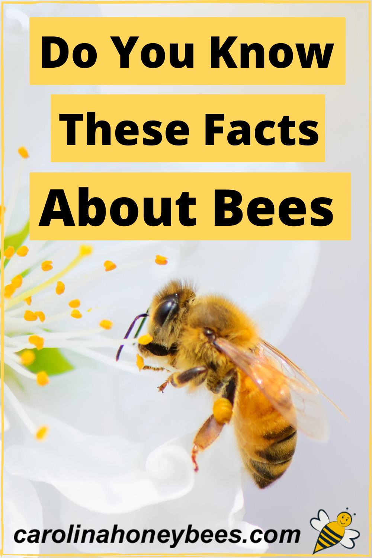 Pin On Honeybee Facts
