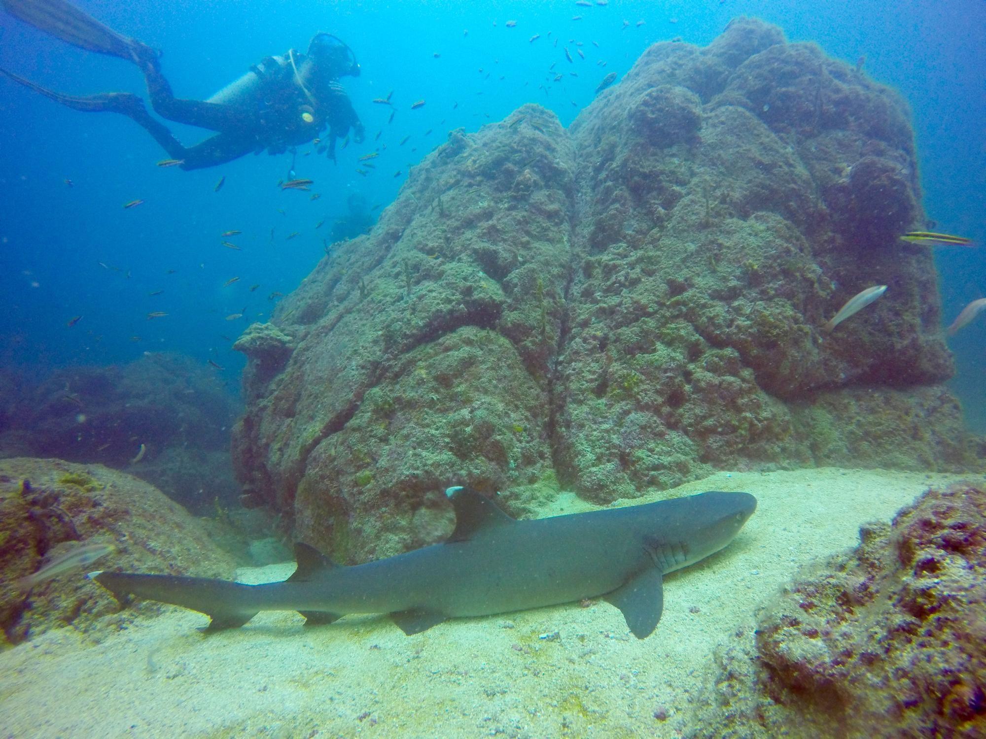 Coiba Dive Center Santa Catalina Panama Top Tips Before You Go Tripadvisor Diving Center Panama Travel Trip Advisor