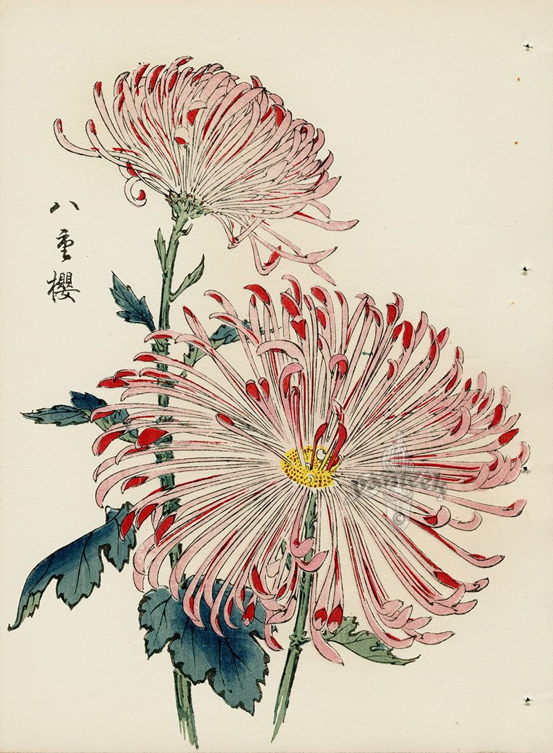 from Art of the Japanese Chrysanthemum Japanese