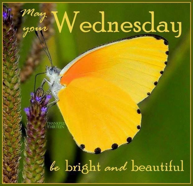 Hello wednesday happy hump day pictures photos and images for - May Your Wednesday Be Bright And Beautiful Butterfly