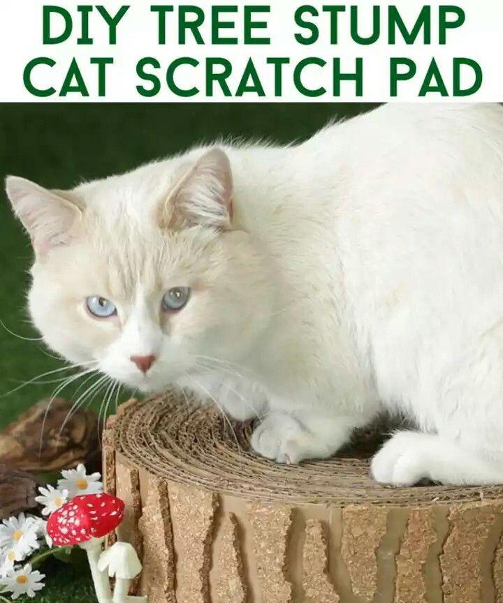 Pin By Jennifer Friend On Diy Diy Cat Tree Cat