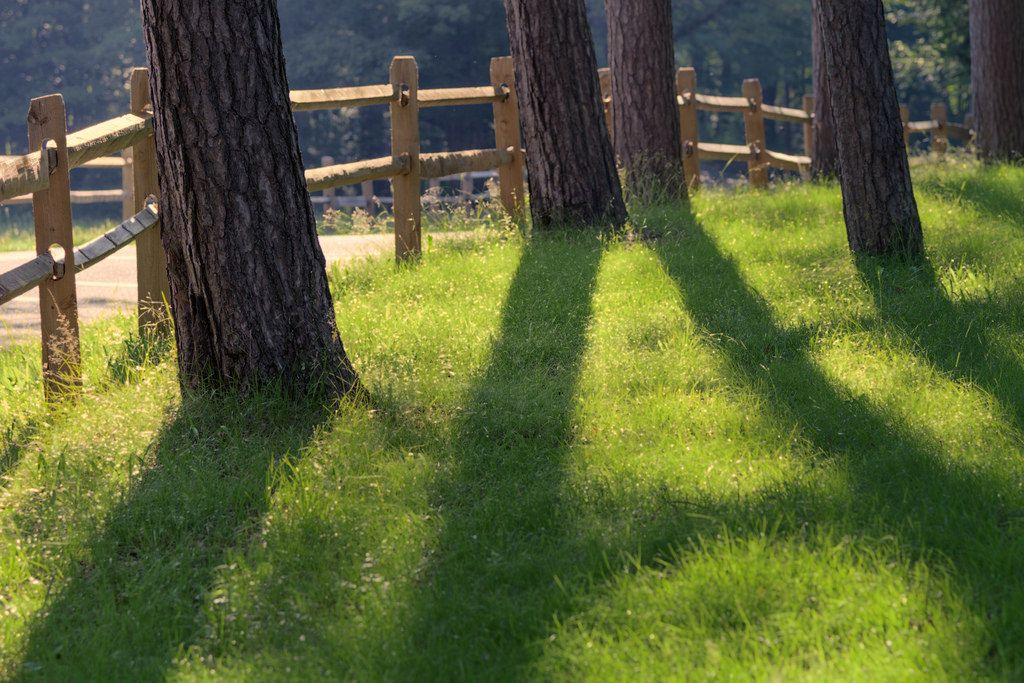 https://flic.kr/p/VE74Dd | Fences, Shadows | I hope everyone has a great Fence Friday :)
