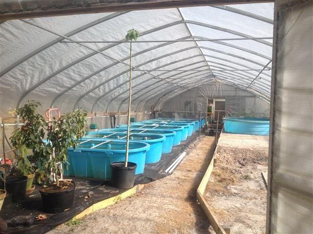 Tilapia Vita Farms-a dream come true! | Aquaponic ...