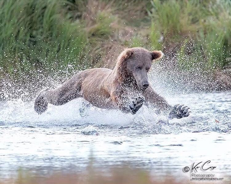 Pin by david feil on Peanut Butter Bear photos, Animals