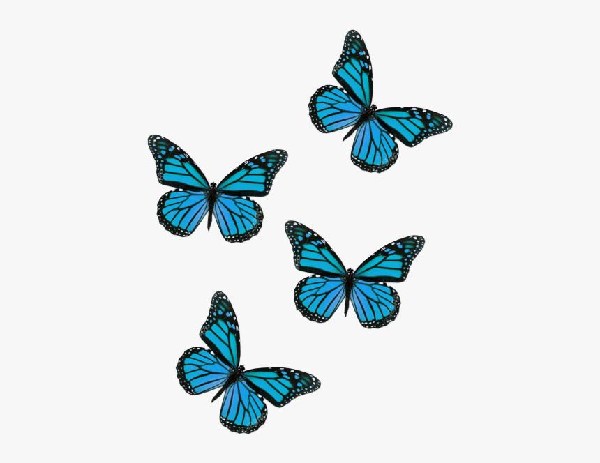 Butterflies Butterfliesstickerremix Butterfly Aesthetic Flying Pink Butterfly Png Transparent Png Is Free Transp Pink Butterfly Blue Butterfly Butterfly