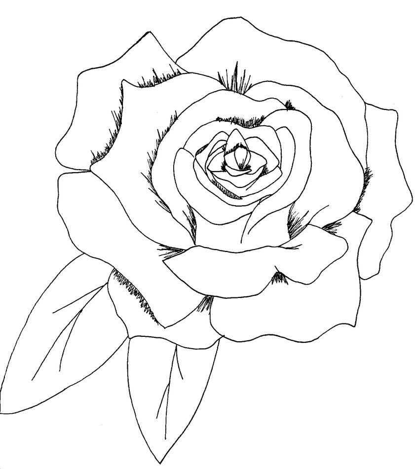Images for easy to draw roses for beginners tattoos for Easy to draw roses for beginners