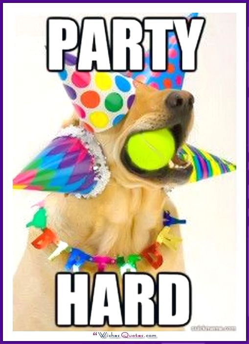 Happy Birthday Memes With Funny Cats Dogs And Animals Happy Birthday Cat Birthday Meme Dog Funny Happy Birthday Meme