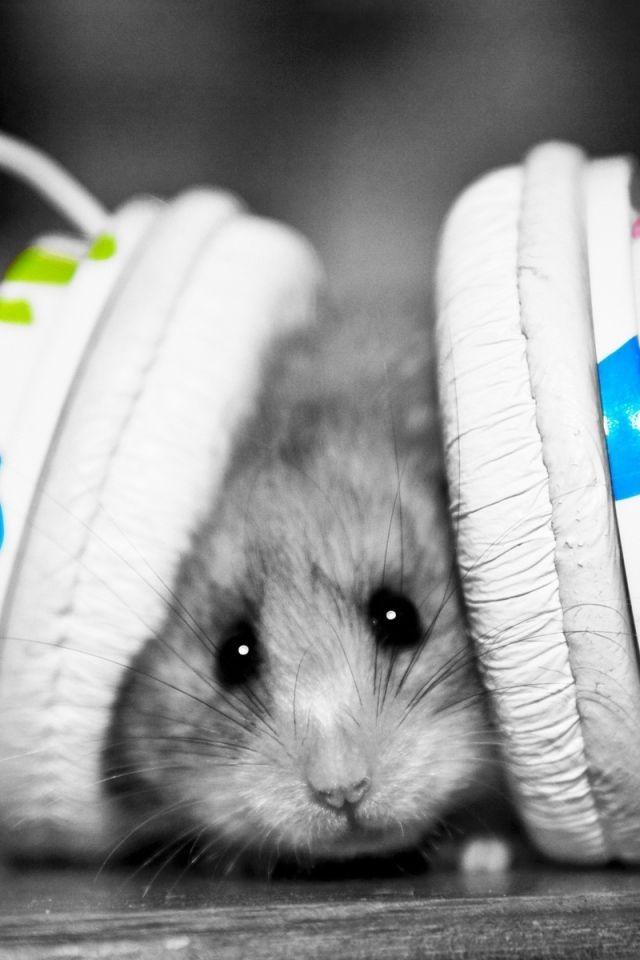 640x960 Wallpaper Funny Music Fan Music Little Hamster Cute Hamsters Hamster Funny Animals