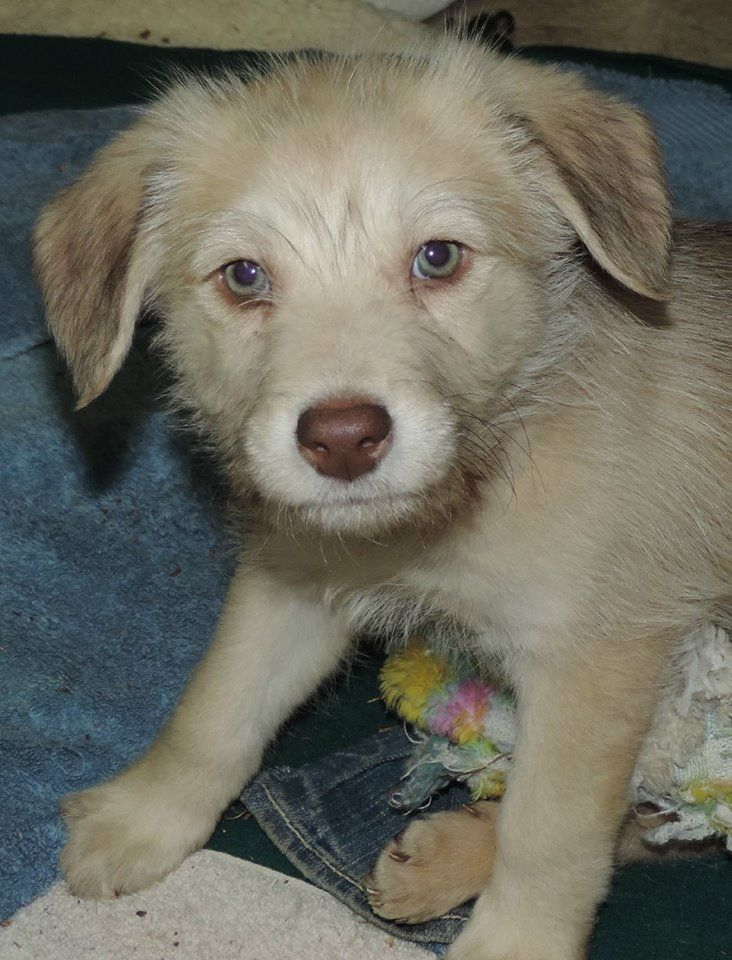Hey Everybody My Name Is Jasper I Am An Affectionate And Snuggly Guy I Would Make A Great Companion Because I Love To Be Pet Adoption Dogs And Puppies Pets