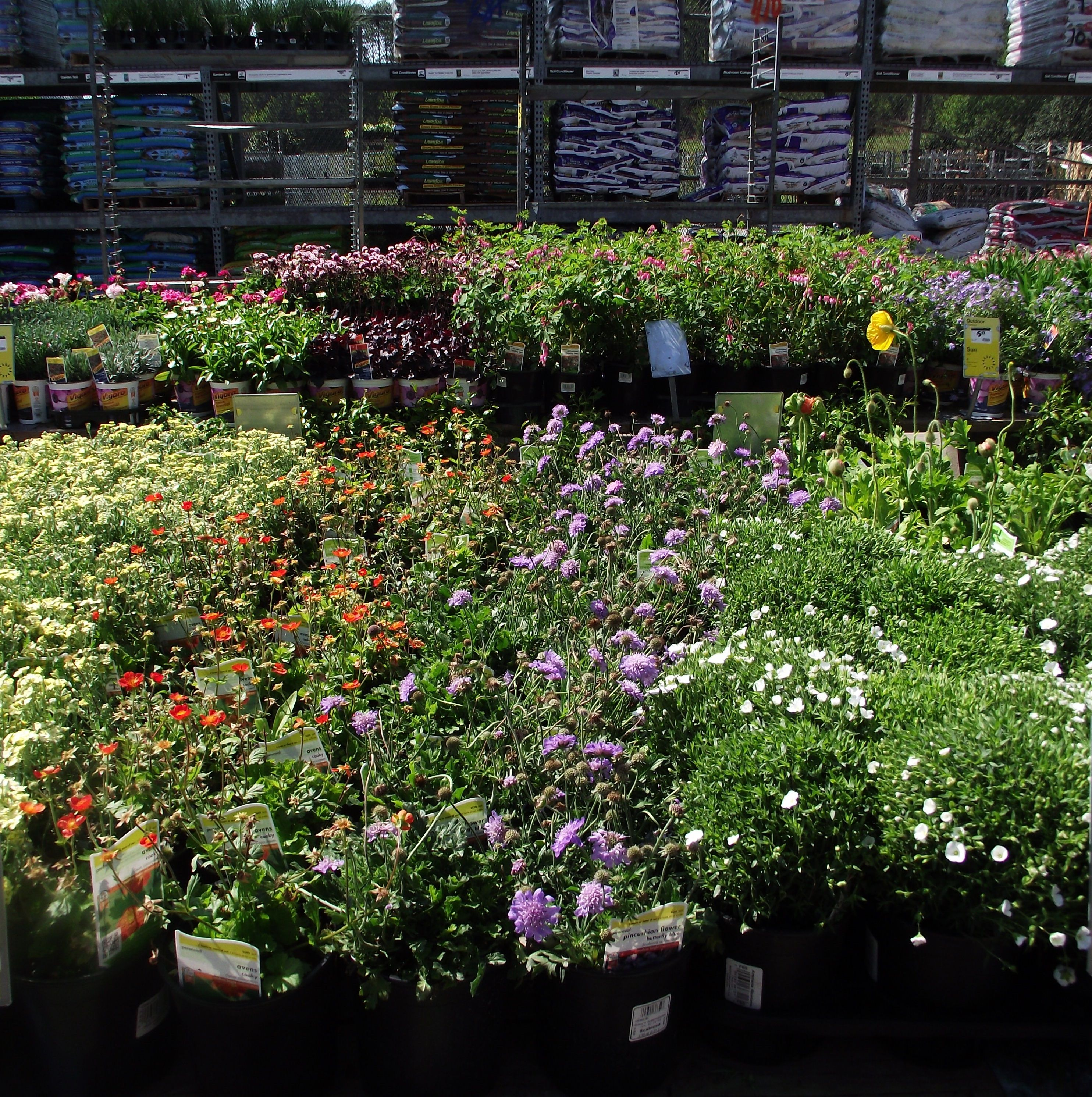 Shopping for flowers for my DIY spring project sponsored