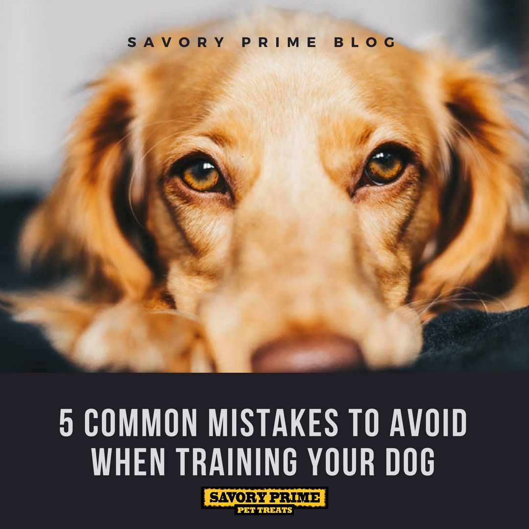 5 Common Mistakes To Avoid When Training Your Dog Meds For Dogs