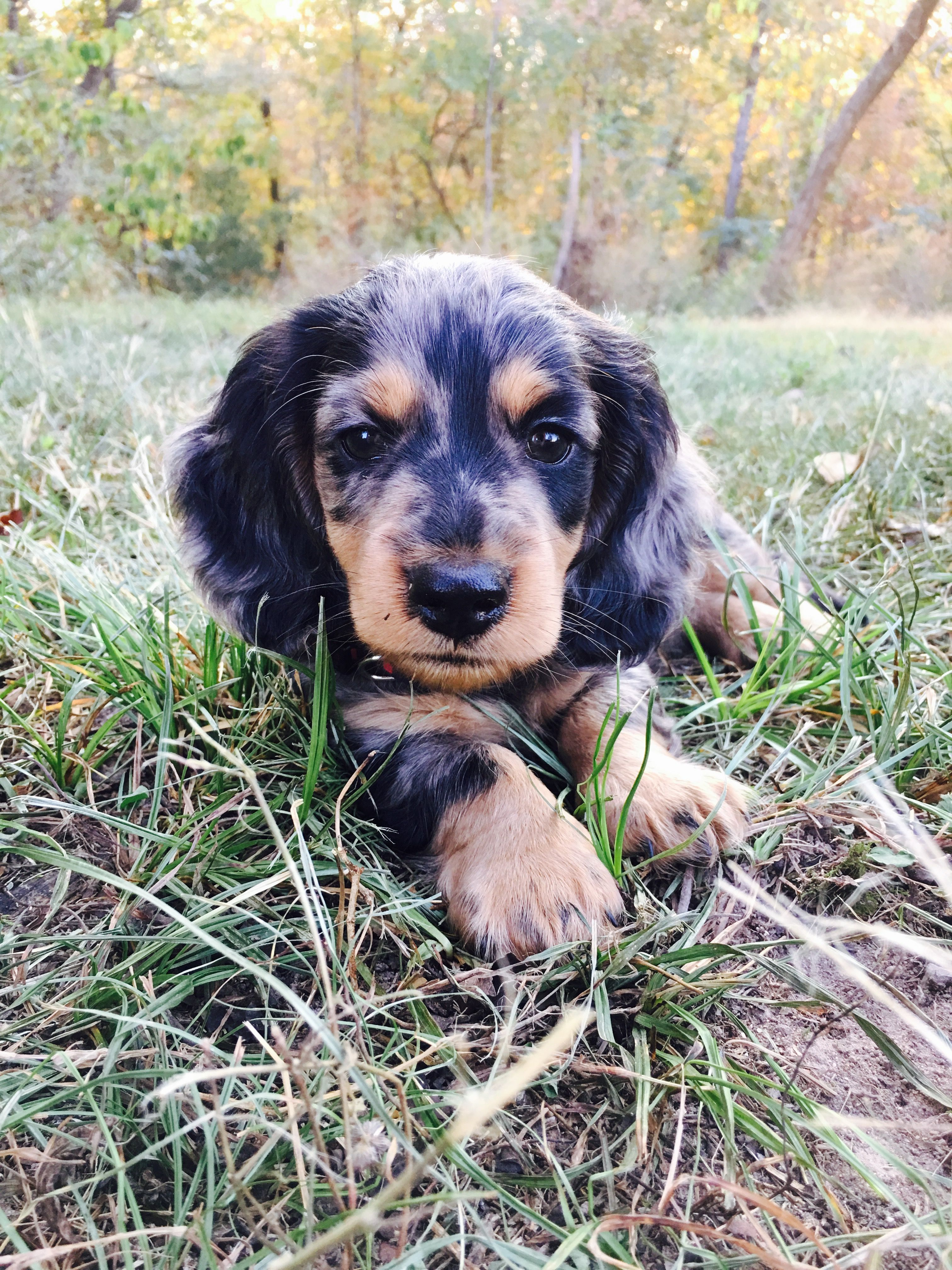 Dotson Puppy Cuteness Overload For My Fur Babies Pinterest