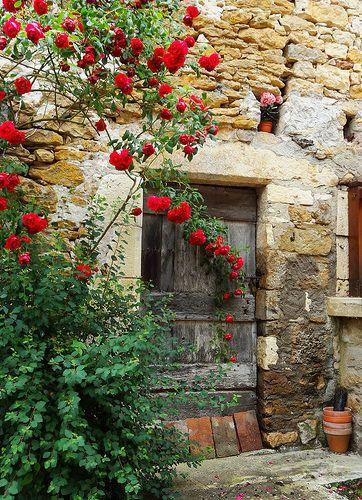 ♔ Roses de Carennac ~