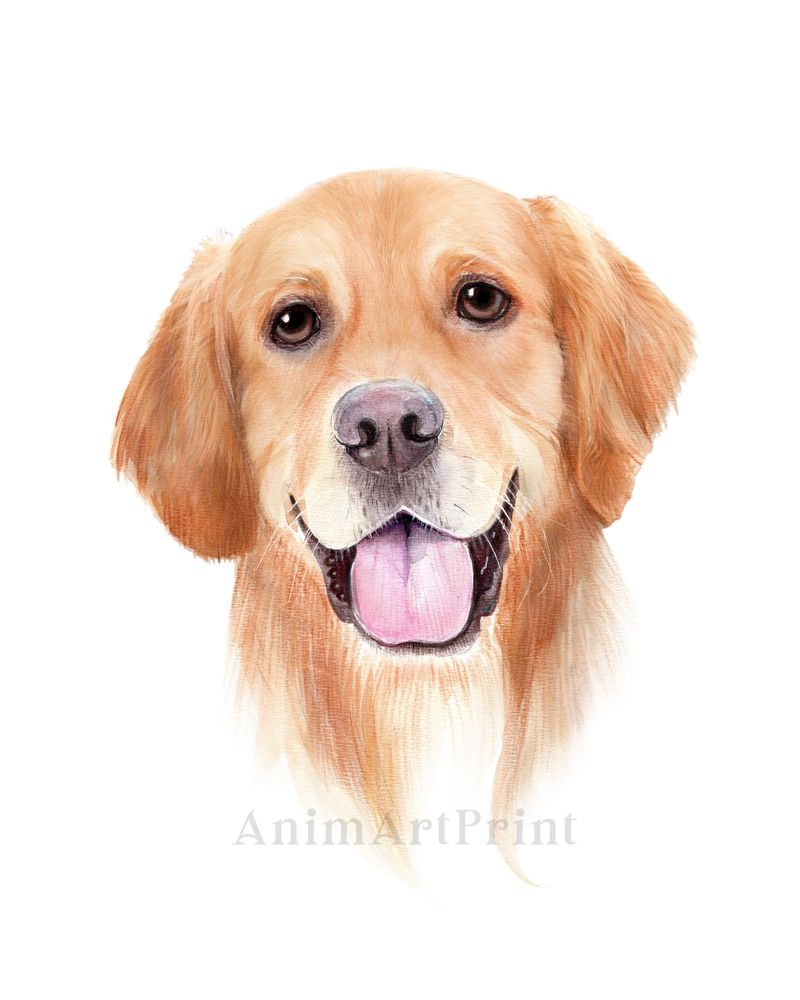 This Item Is Unavailable Etsy Golden Retriever Art Dog Portraits Illustration Dog Paintings [ 1000 x 800 Pixel ]