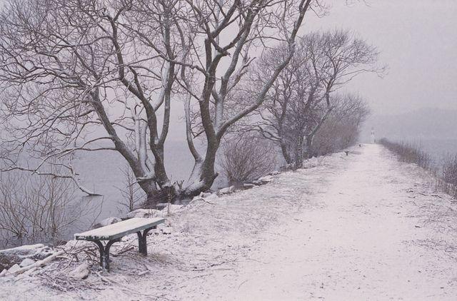 Pretty snow scene.
