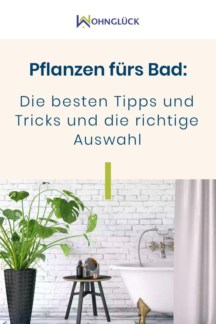 Photo of Pflanzen fürs Bad: Die besten Tipps und Tricks und die richtige Auswahl