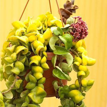 20 Super Easy Houseplants You Ll Love Plants House 400 x 300