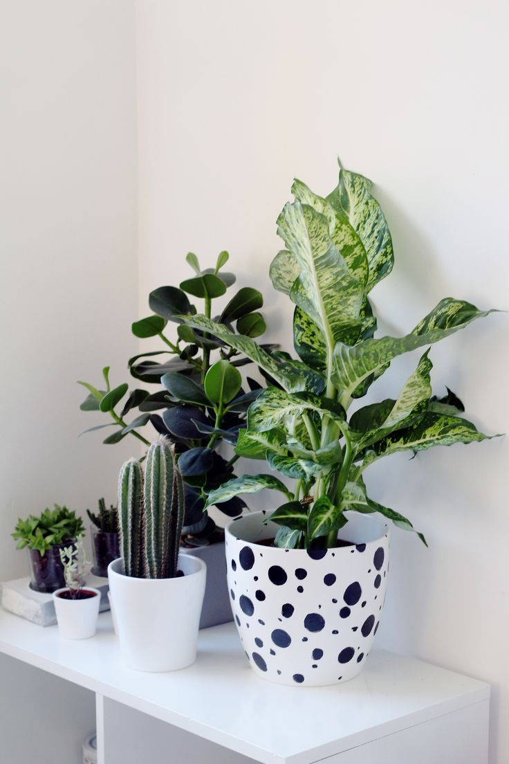 All in the Details | DIY Home | Plants, Indoor plants, Green plants