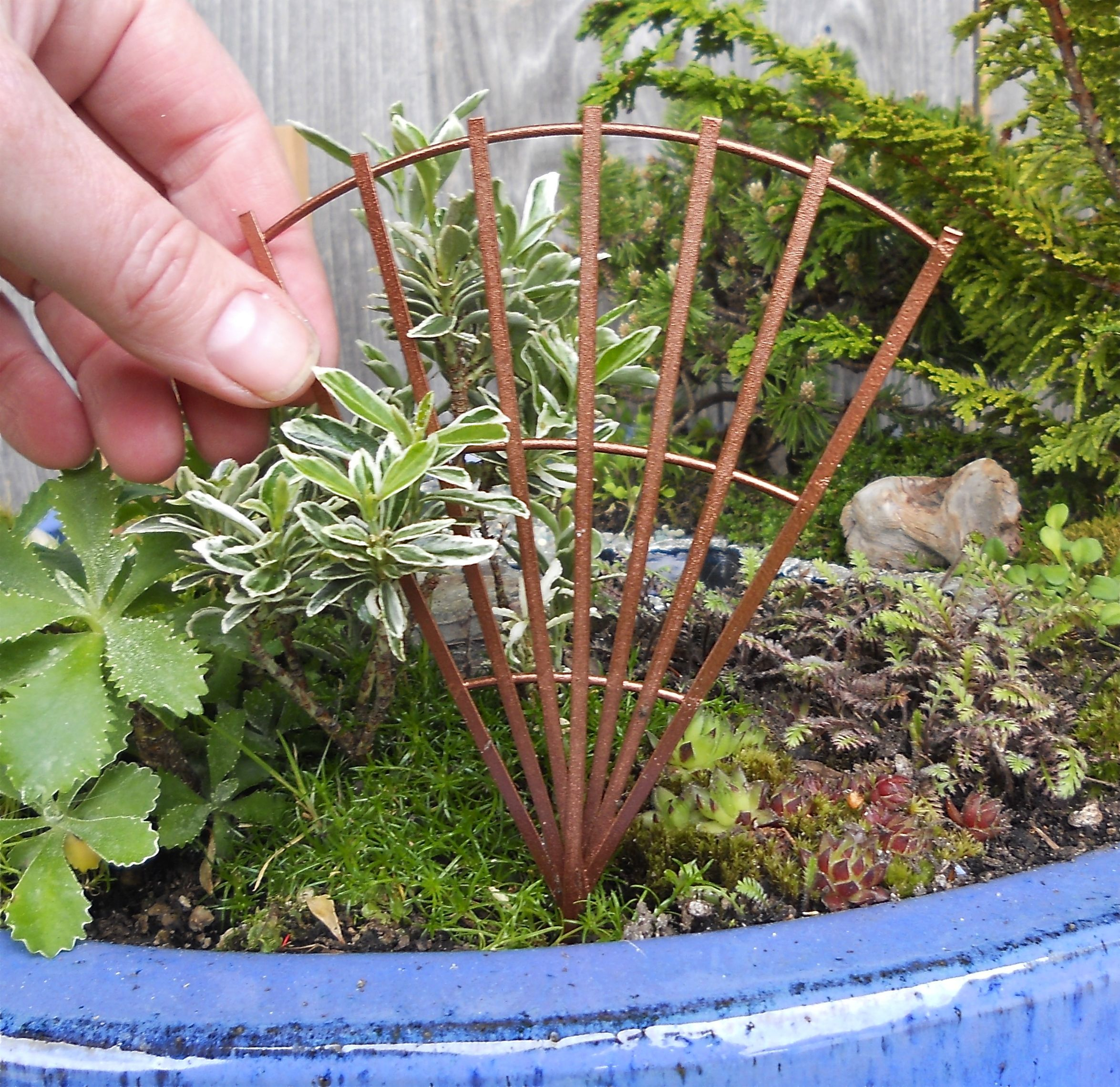 New Miniature Garden Plants & Accessories for the New Hobby