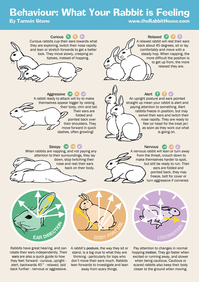 Bunny Body Language Small Fuzzies Pinterest Bunny Rabbit And