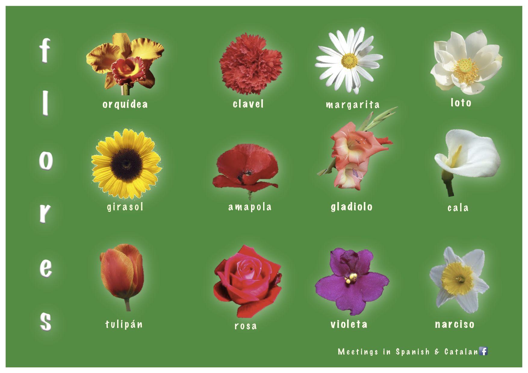 Flores flowers spanish vocabulary teaching spanish - Clase de flores y sus nombres ...