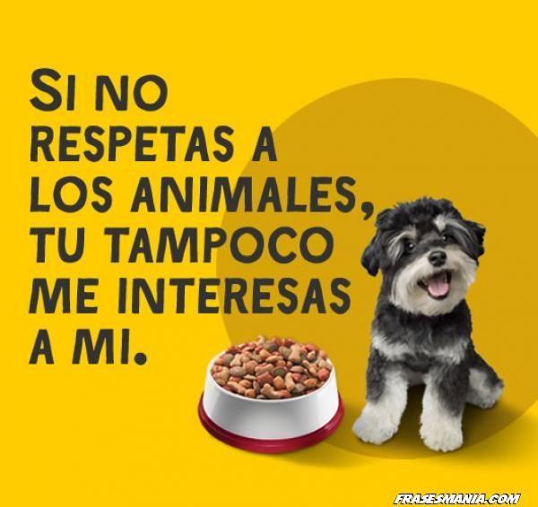 Frases Bonitas Sobre Perros Perros Frases Animales Y