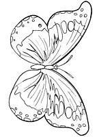 Zwierzeta Kolorowanki Motyle Motylki Dla Dzieci Malowanki Do