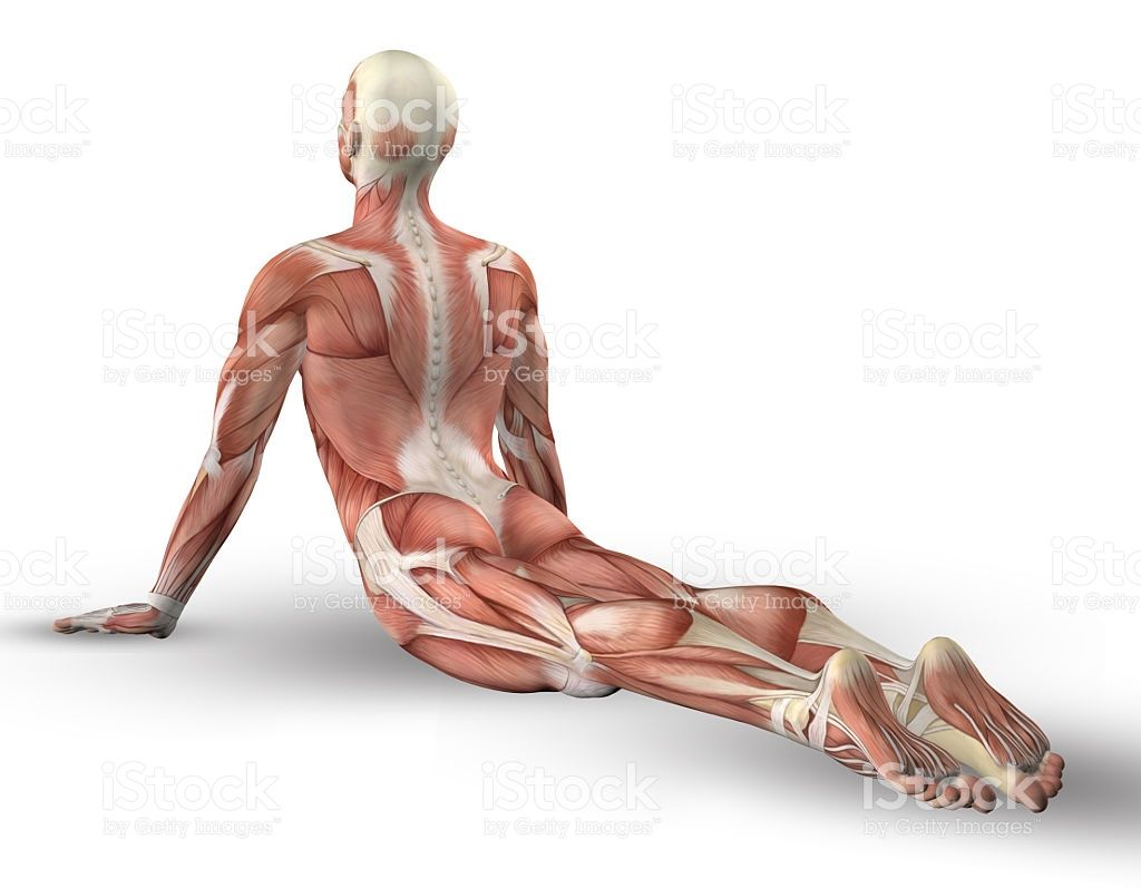3D male medical figure with muscle map in yoga pose | Pinterest ...