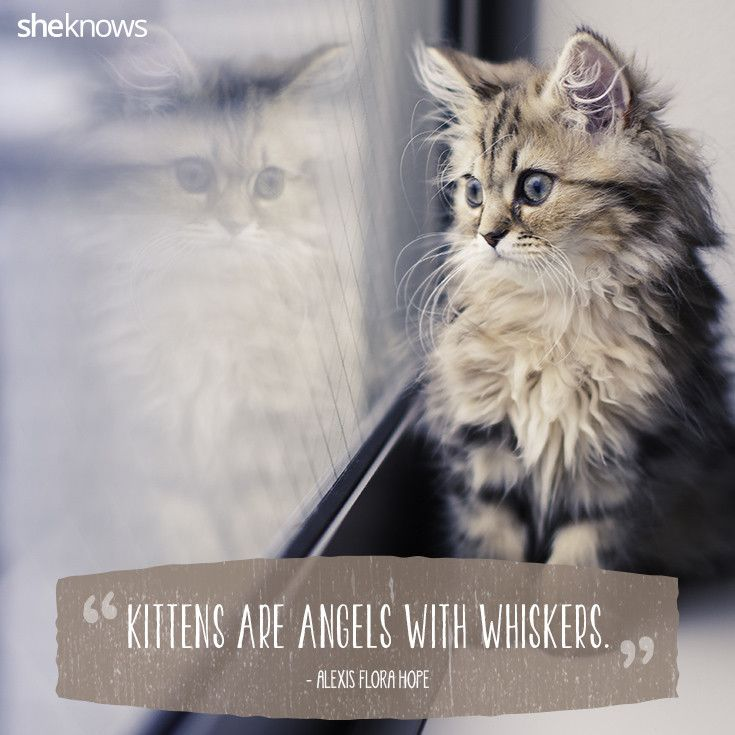 Quotes About Cats Adorable Cats Possess Numerous Charms And Anyone Who Has Ever Loved A Cat