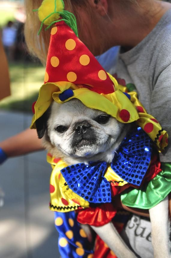 Southern Nevada Pug Rescue Hosts Its 11th Pug O Rama At Silver