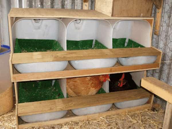 9 utilisations tonnantes du vinaigre dans le poulailler poules poulailler pondoir et. Black Bedroom Furniture Sets. Home Design Ideas
