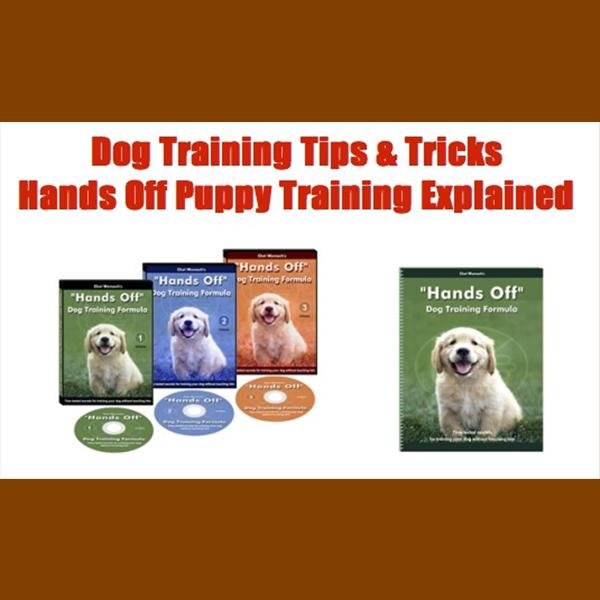 Dog Training, Dogs, Dog Training Tips