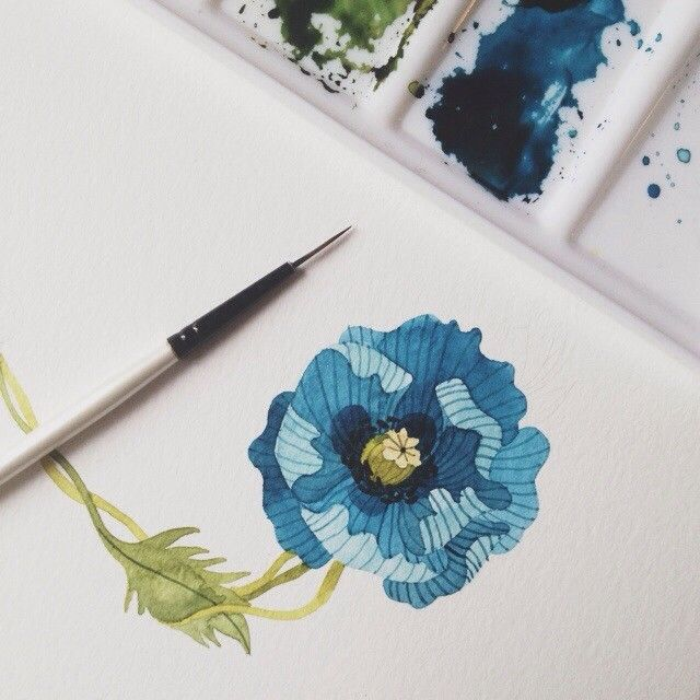 blue poppy in the winter. ps: thank you for all your kind comments on my last pic. xx