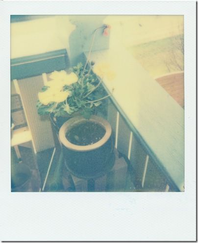 Flowers and Powers 4 the Future (Kamera: Polaroid 600   Film: The Impossible Project – PX 680 First Flush Color Shade (07-2011))