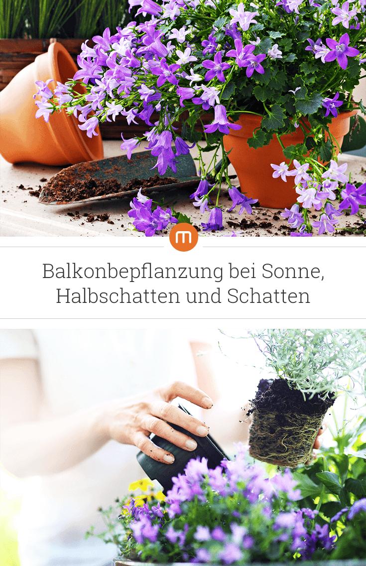 Balkonbepflanzung bei Sonne, Halbschatten und Schatten | moebel.de