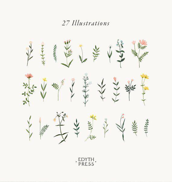 Photo of Clipart botanique fleur sauvage dessiné à la main fleur aquarelle png fleurs élégant avec …