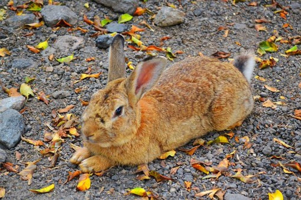 How old is your rabbit love rabbits visit us by clicking