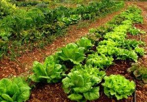 'Los alimentos ecológicos son más nutritivos' | Salud - Hábitat - Conciencia