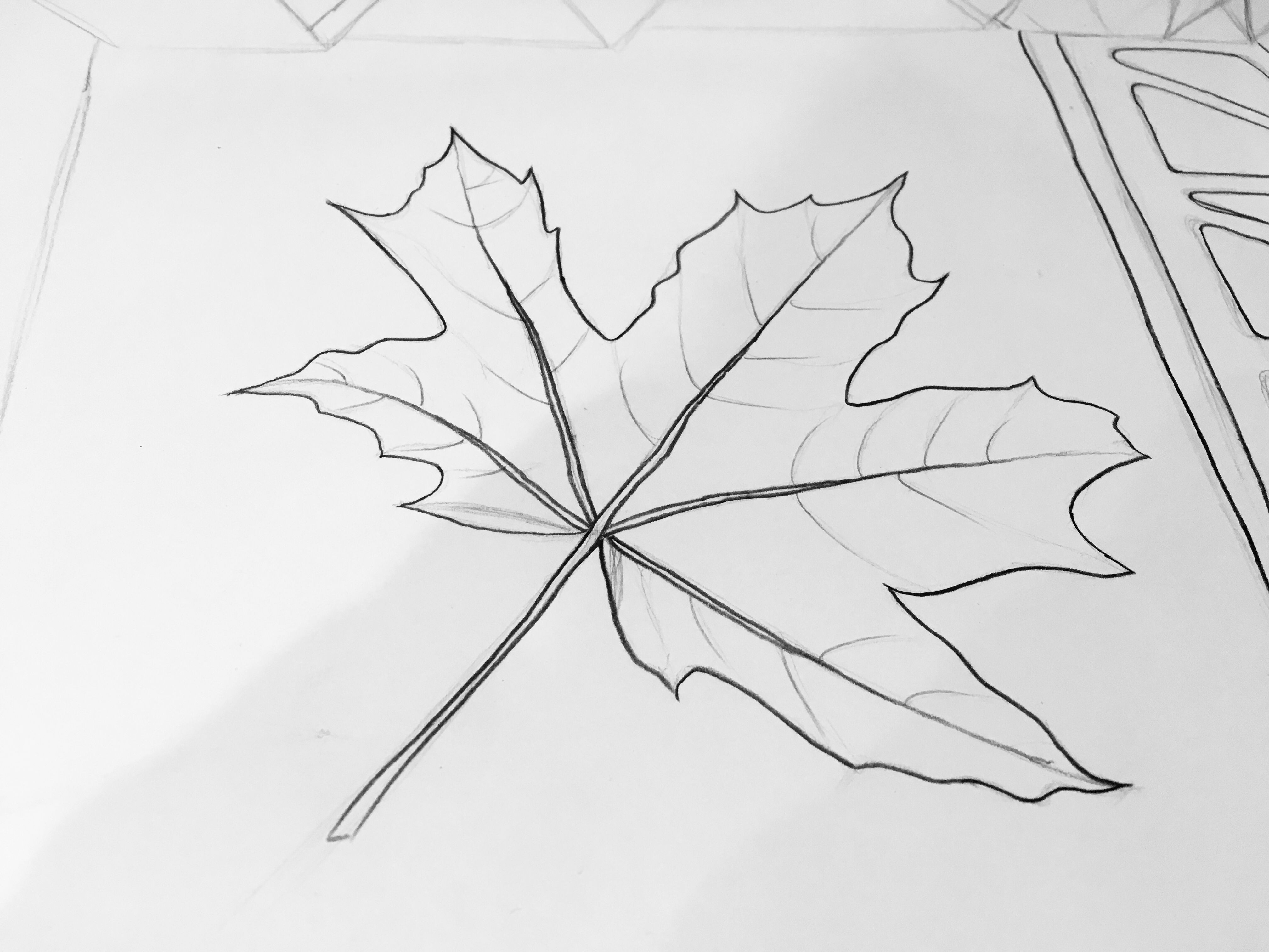 How to draw a maple leaf yourself