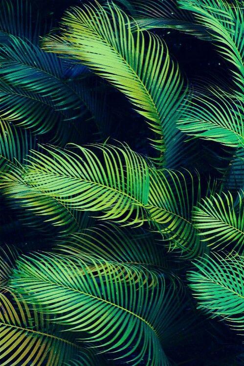 Palmenblätter | Natur | Palmen, Blätter, Hintergrundbilder