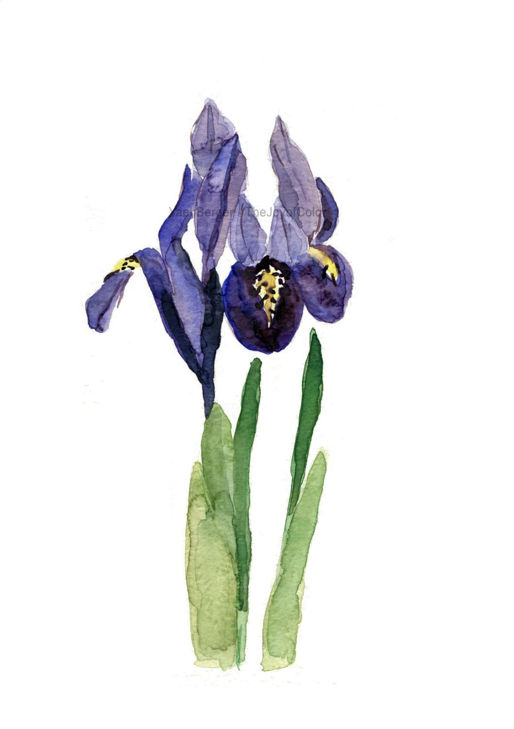 Art Print Iris Print Of Watercolor Purple Green By Thejoyofcolor