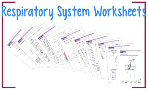 Respiratory system worksheet 3 respiratory system worksheets and respiratory system worksheet 3 respiratory system worksheets and tes resources ccuart Choice Image