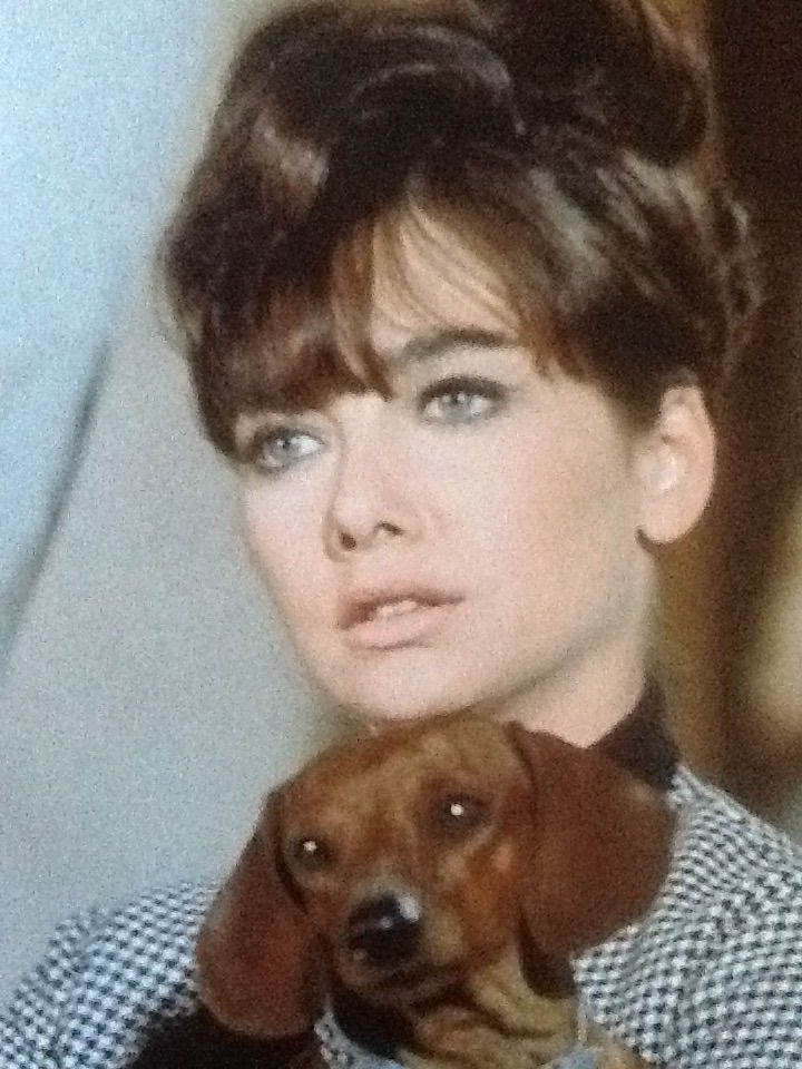 The Ugly Dachshund 1966 Films To See Dachshund Dogs Being Ugly