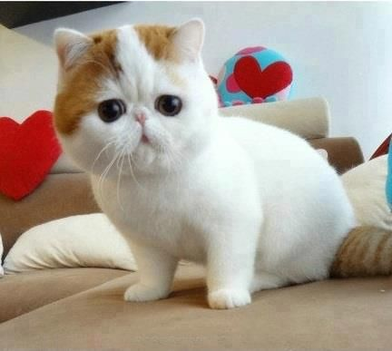 Cute little cat I think it's Japanese but not sure???