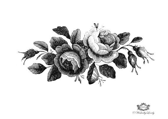 Black And White Victorian Roses Illustration By Wickedlylovelyart