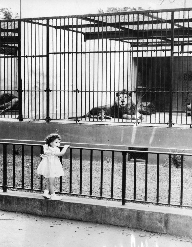 The Zoo 1958 Audubon Zoo New Orleans Louisiana Louisiana History