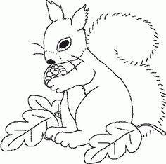 eichhörnchen (14) | herbst ausmalvorlagen, malvorlagen