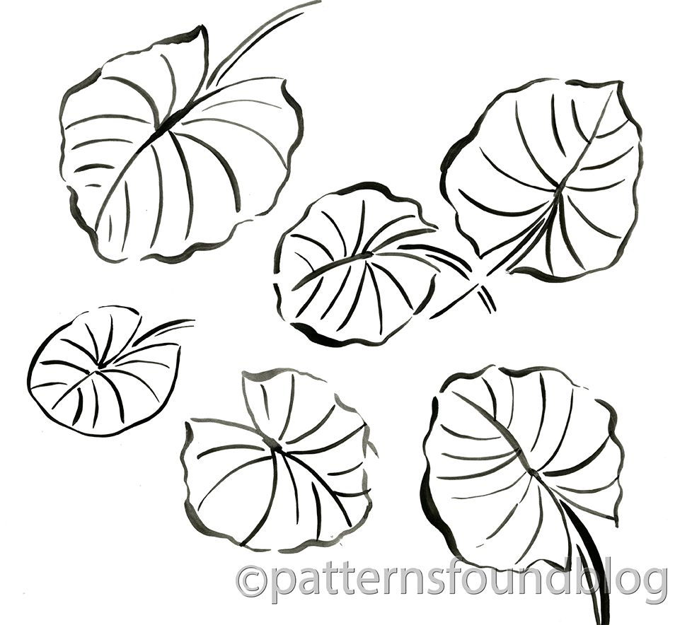 lily pad coloring page 9874