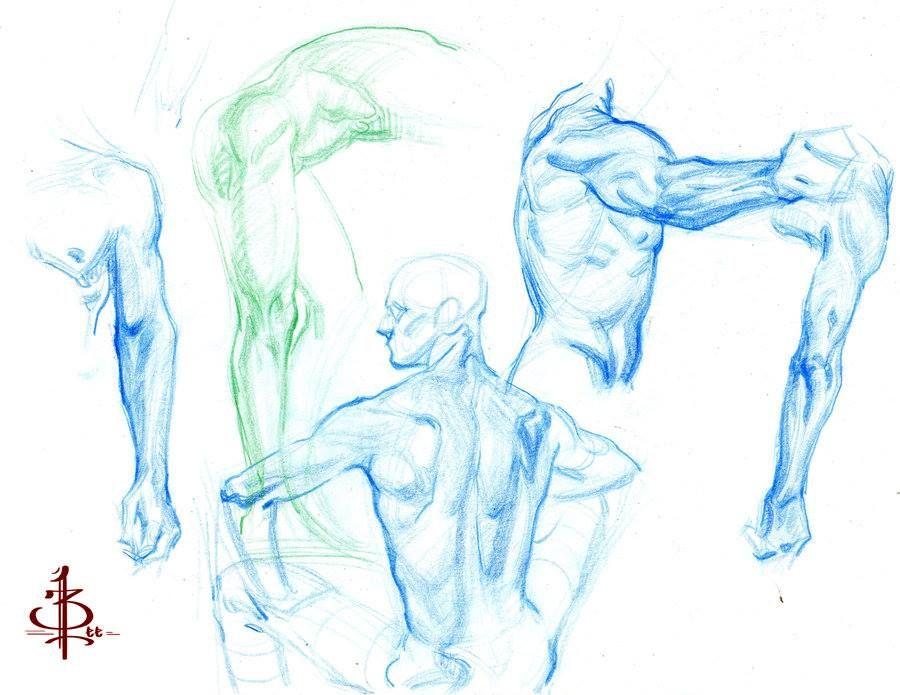 Pin By Ch Huang On Anatomy Pinterest Human Anatomy Art Anatomy
