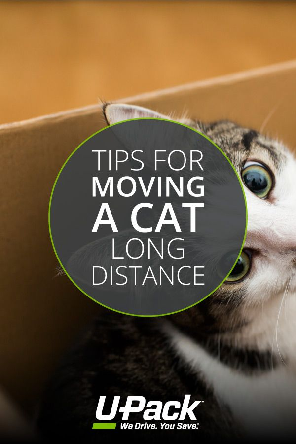 Moving Can Be A Stressful Experience For Cats Check Out These Helpful Tips For An Easy Relocation Moving Moving Tips Long Distance